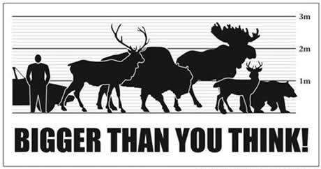 Graph showing the relative size of B.C.s animals compared with a vehicle and human to show that they are Bigger Than You Think