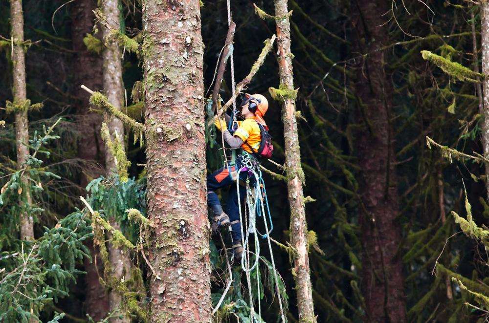 Worker in safety gear climbing a tree in a forest