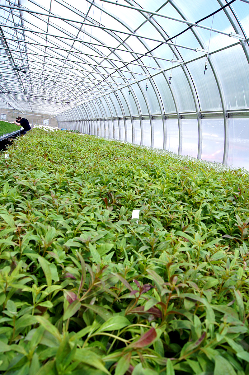 Interior of greenhouse with young plants