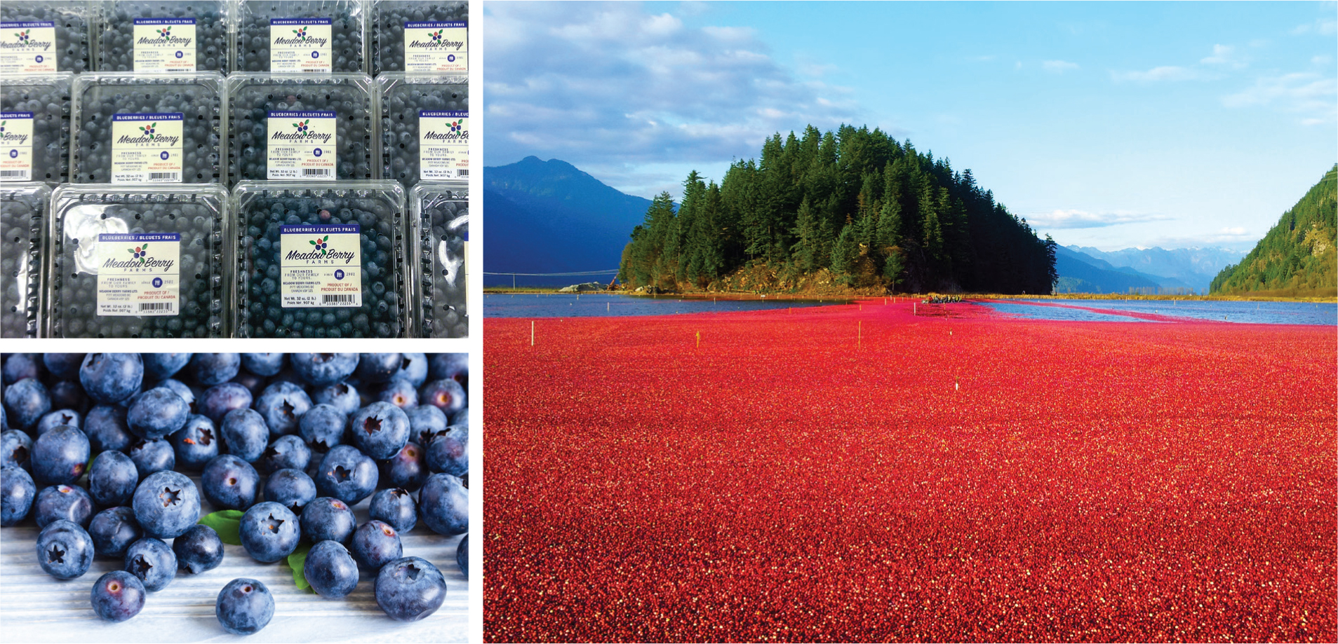 Meadow Berry Farms images