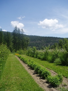 Agroforestry in B.C.