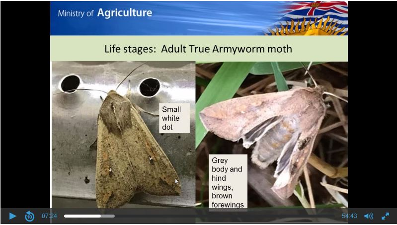 Webinar, Emerging Pests, Army Worm and Western Corn Rootworm. Recording, February 21, 2018