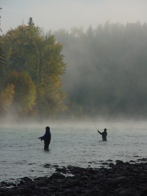 fly fishing for steelhead on the Bulkley River